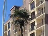 Элитные апартаменты в Батуми - фото 1