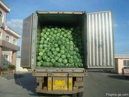 Fresh good quality cabbage for sale good price