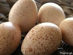 Индюшиное яйцо