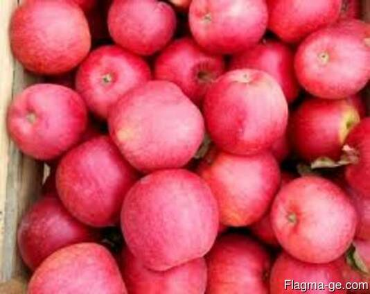 Продаем яблоки разных сортов