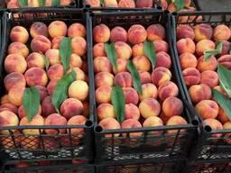 Продаётся 2018 года урожай персик и нектарин