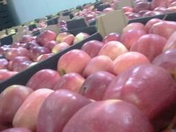 Яблоки - фото 5