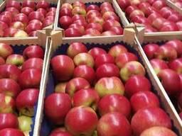 Яблоки из Польши! Apples from Poland! - photo 8