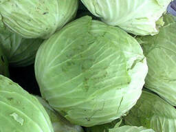 Fresh good grade cabbage for sale - photo 2