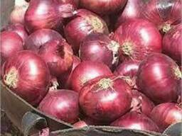 Fresh onion for sale good prices
