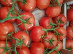 Georgian Fruts продаем томаты премиум класса на ветке - фото 2