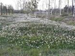 Ищу компаньона в экологический бизнес на земле в Грузии. - фото 5