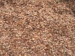Álnus glutinósa , Семена ольхи, ольха семена, ольха черная семена, семена ольхи клейкой - photo 5