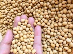 Продаем Соя бобы 8500 тонн, урожай 2020 года.