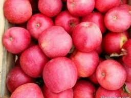 Продаем яблоки разных сортов - photo 1