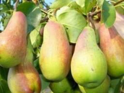 Продаем яблоки разных сортов - photo 2