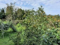 Продается дом в Аджарии , в горной местности, с землей несельхоз.