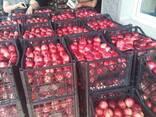 Продам оптом грузинский персик нектарин сезон 2020 - фото 1