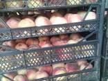 Продам оптом грузинский персик нектарин сезон 2020 - фото 3