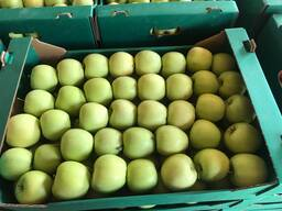 Продам яблоки на экспорт
