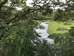 Продаётся земля в Чайсубани возле реки,15 км. от Батуми.