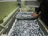 Рыба черноморская - фото 2