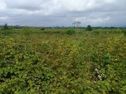 В Шекветили продается земля 700 кв. м.